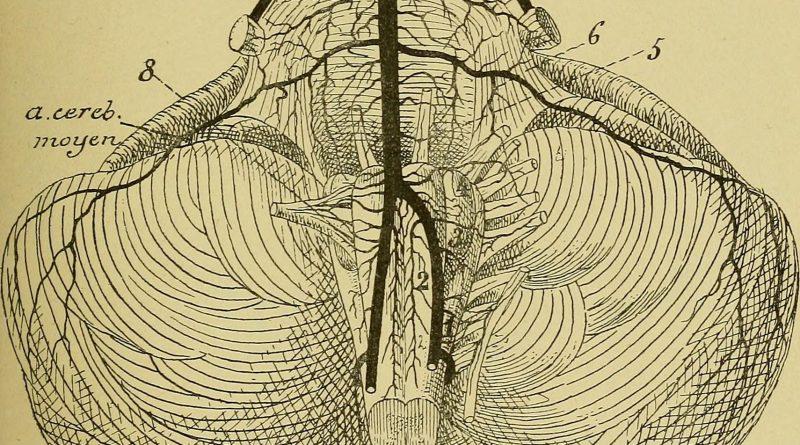 nerf-glosso-pharyngien