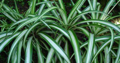 plantes pollution