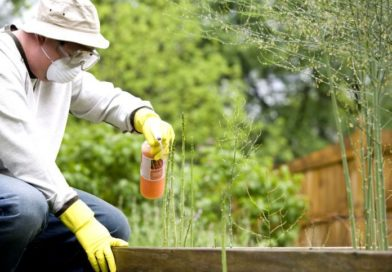 Pesticides dans l'agriculture: quels dangers réels? + comment les éviter
