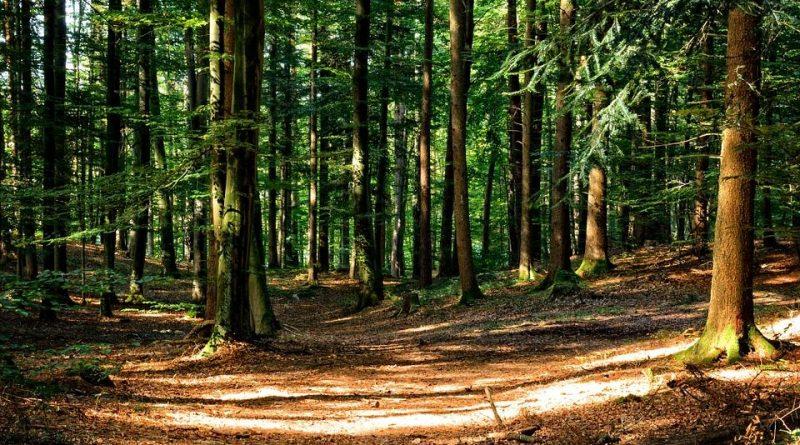 bienfaits de la marche en forêt