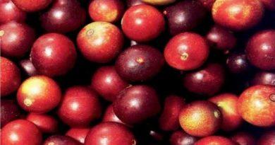 Le camu-camu, le superfruit riche en vitamine C