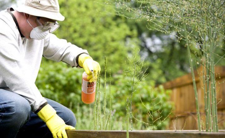 Le danger des pesticides comme le chlorpyrifos + comment les éviter