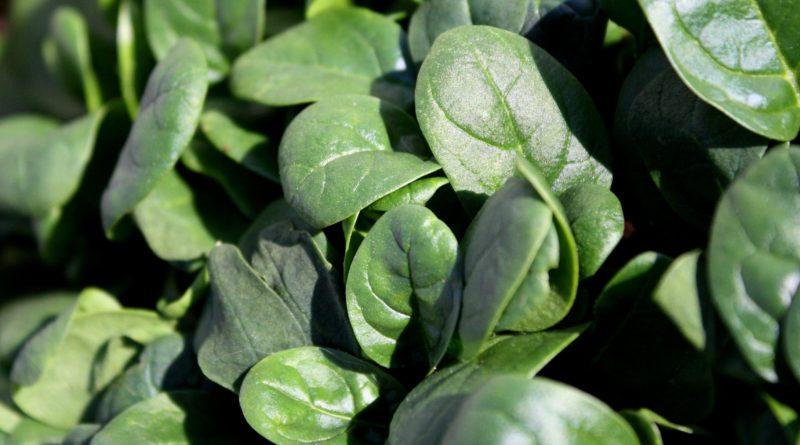Vitamine K - Bienfaits, sources alimentaires et carence