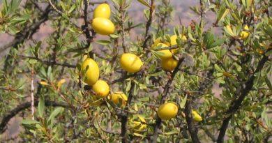 Huile d'argan - Les bienfaits de l'huile d'argan (cheveux, acné, anti-âge...)