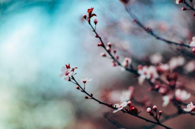printemps medecine chinoise