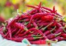 Le piment de Cayenne est bon pour votre cœur, vos intestins et bien plus encore