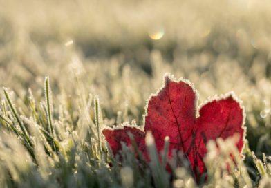 Boostez votre système immunitaire avant l'hiver!