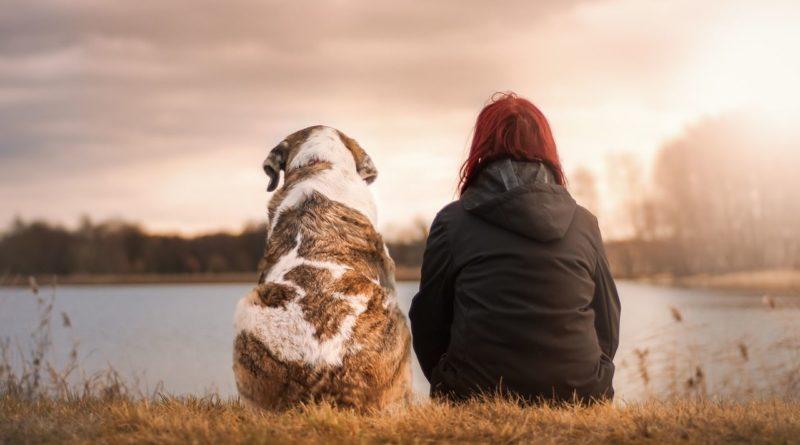Accompagnez le chagrin de la perte d'un animal