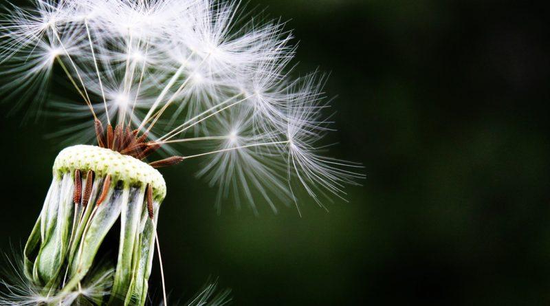 Le retour des allergies: Comment soulager les symptômes