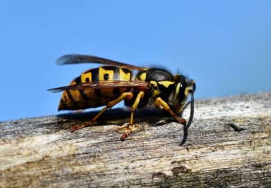 La trousse naturelle pour la piqure d'insecte: que faire après la piqure ?