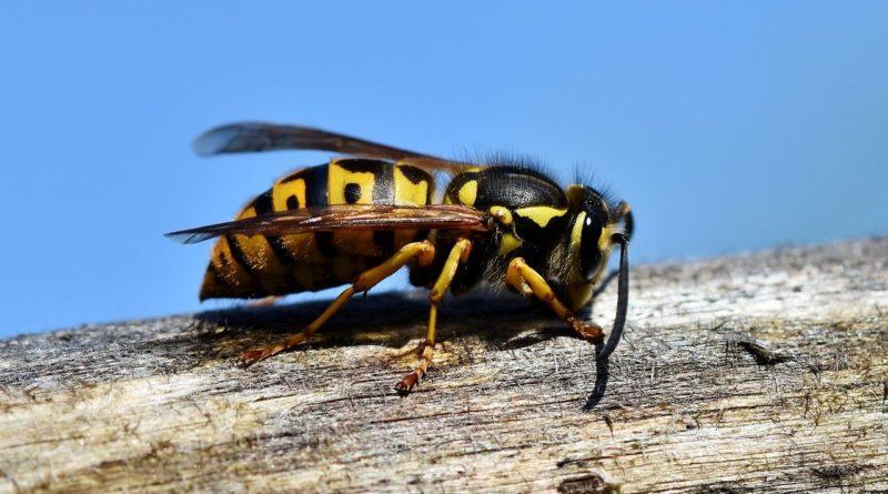 piqure insecte que faire