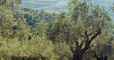 olivier naturopathie
