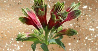 elixirs floraux andins