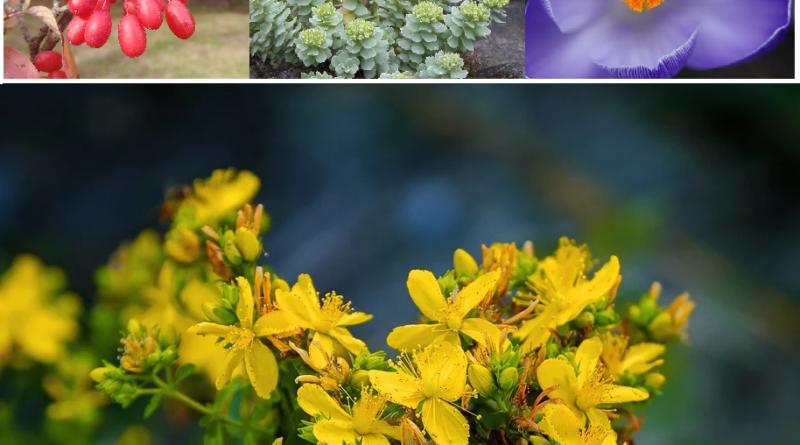 plantes contre la depression