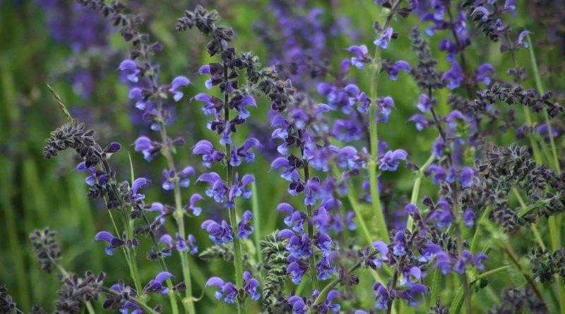 plantes a eviter en cas de cancer hormono dependant